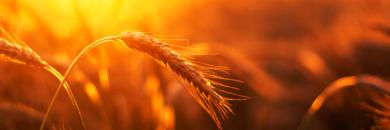 'Russian' Ransom Gang Targets Big Agri Co-op—Food Shortages Ahoy?